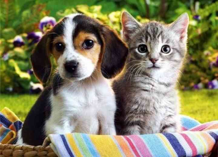 12 Μύθοι για τα Ζώα διαψεύδονται