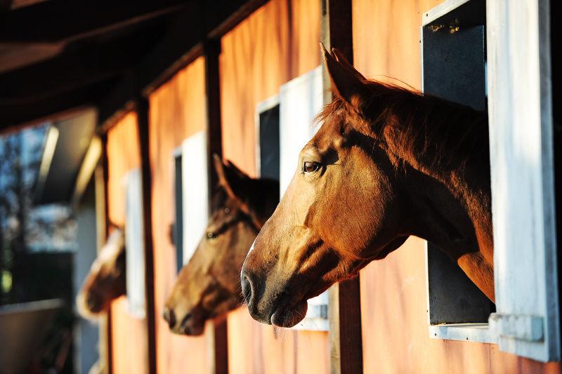 Άλογο: η ομορφιά του μέσα μας