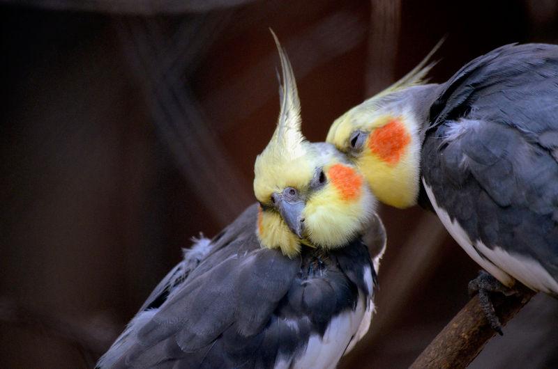 Αποκτώντας έναν παπαγάλο…