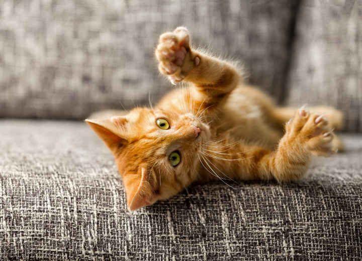 Αποκωδικοποίησε τη συμπεριφορά της γάτας σου