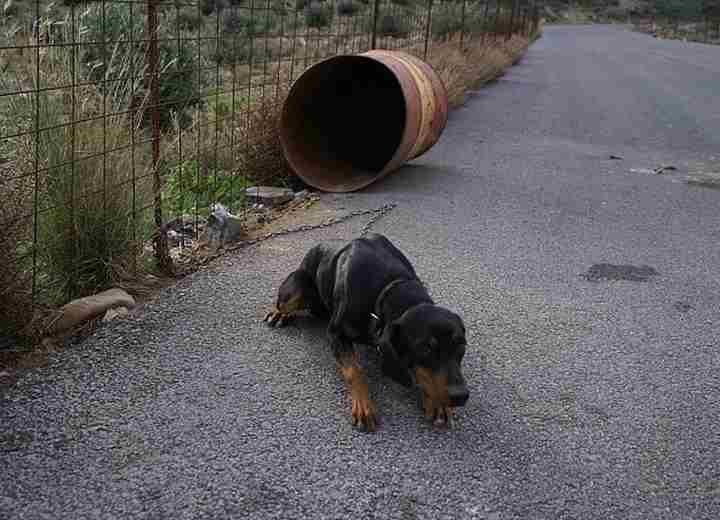 Βαρελόσκυλα: Η απανθρωπιά μέσα μας…