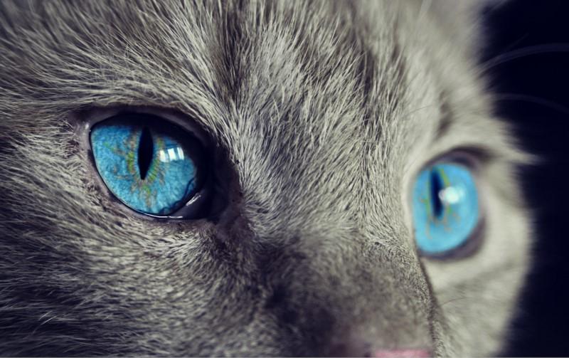ΔΗΜΙΟΥΡΓΙΑ ΕΘΝΙΚΟΥ ΜΗΤΡΩΟΥ για τα ζώα νομοσχέδιο του υπουργείου Εσωτερικών, με τίτλο Πρόγραμμα Άργος