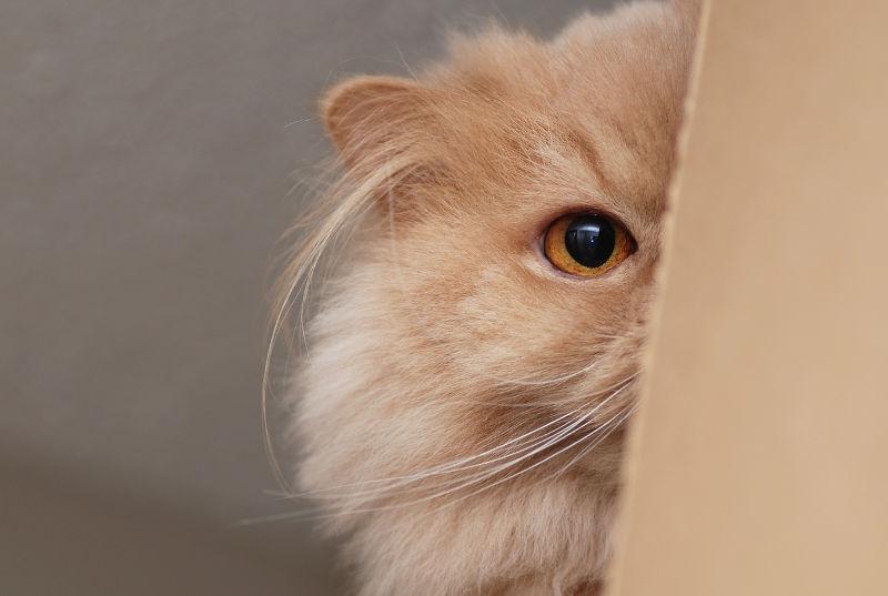 Γιατί οι γάτες κρύβονται σε κούτες;