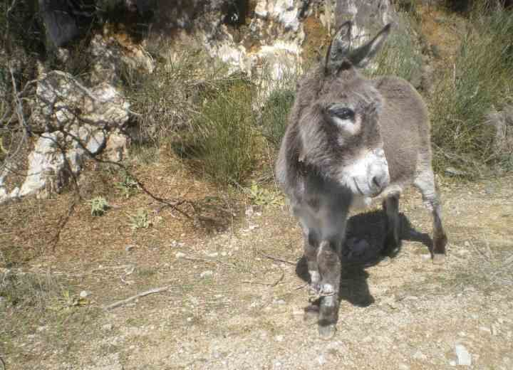 Η κακοποίηση και ο ακρωτηριασμός ζώων συνεχίζεται