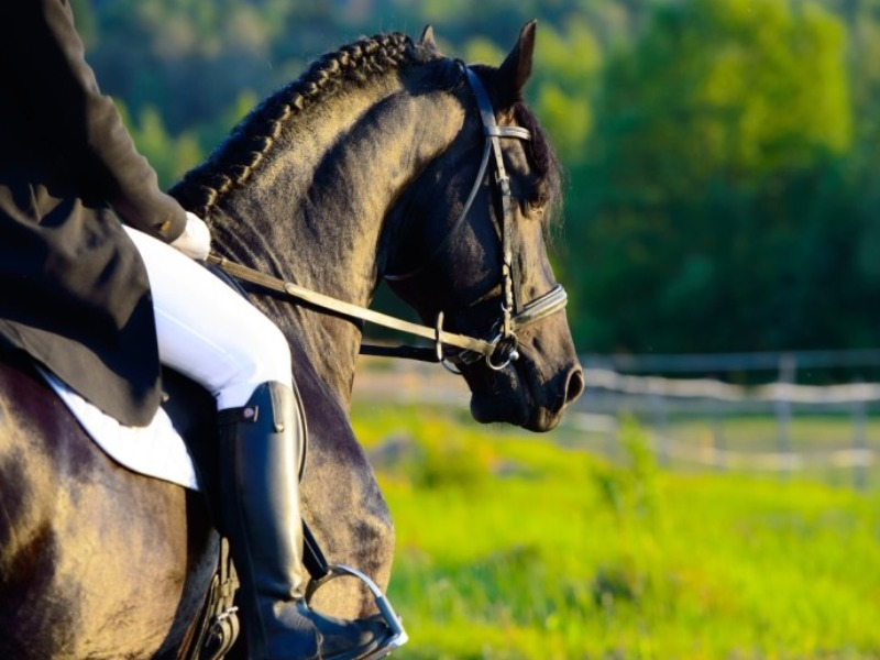 Ιππασία το ευγενέστερο άθλημα στο greeks channel