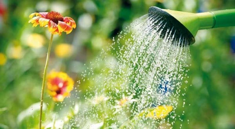 Κρατήστε τα φυτά σας ποτισμένα όσο λείπετε διακοπές