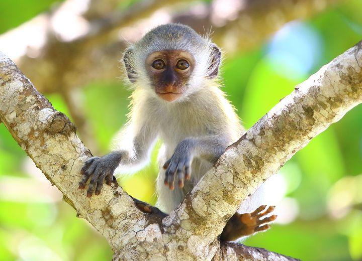 Μαϊμού: Ένα κατοικίδιο διαφορετικό από τα υπόλοιπα!