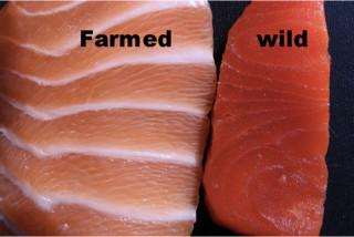 Μάθε ποιες είναι οι πιο καρκινογόνες τροφές! solomos