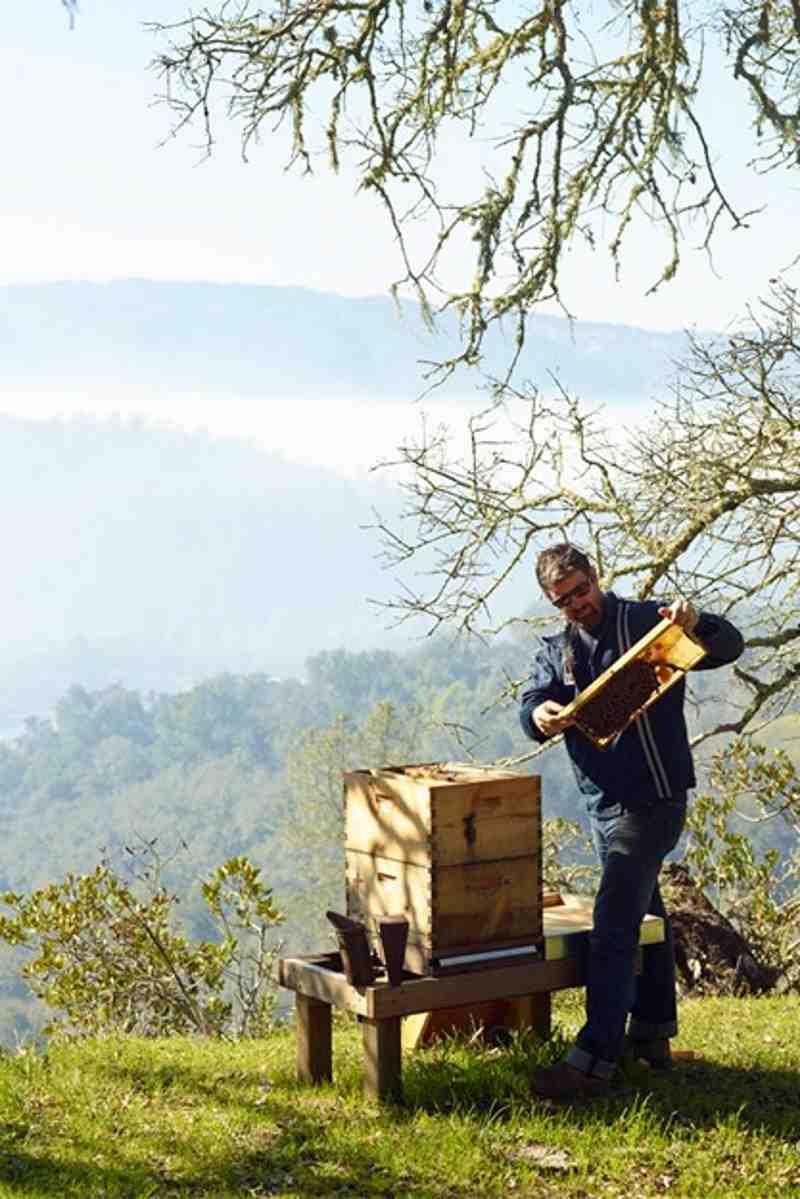Μέλισσες: Δώστε τους τον χώρο που τους αξίζει!