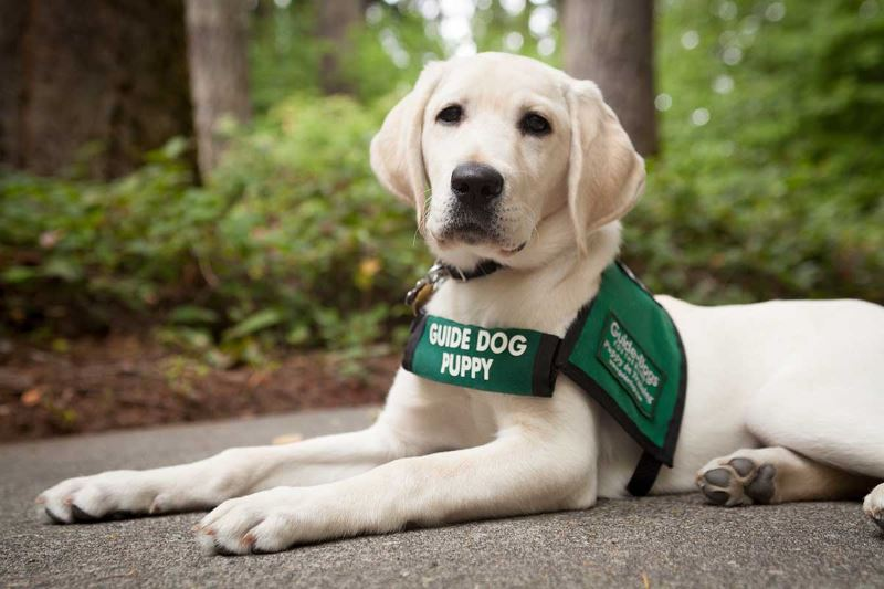 mentor guide dogs for the blind: Η σχολή εκπαίδευσης σκύλων που θα αλλάξει την κοινωνία μας