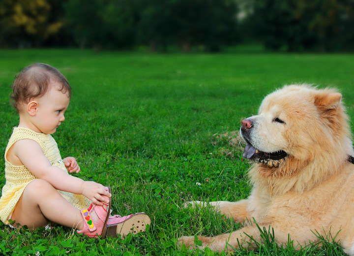 Μικρό παιδί, Μεγάλο σκυλί: Γιατί είναι καλό να συμβιώνουν!