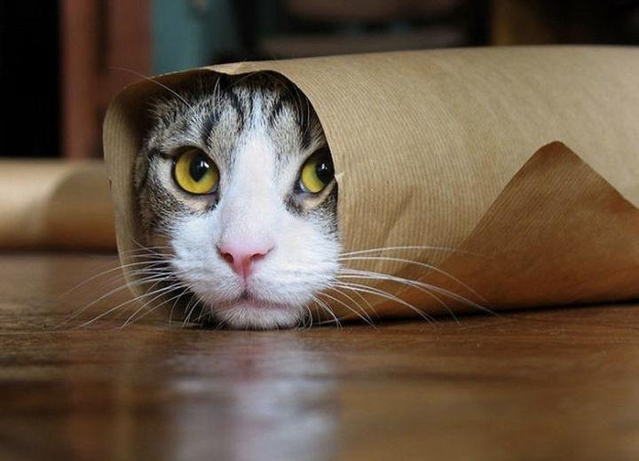 Νιάου-νιάου βρε γατούλα...