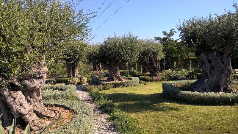 Ο «ΕΛΛΗΝΙΚΟΣ ΚΗΠΟΣ» (hellenic garden)