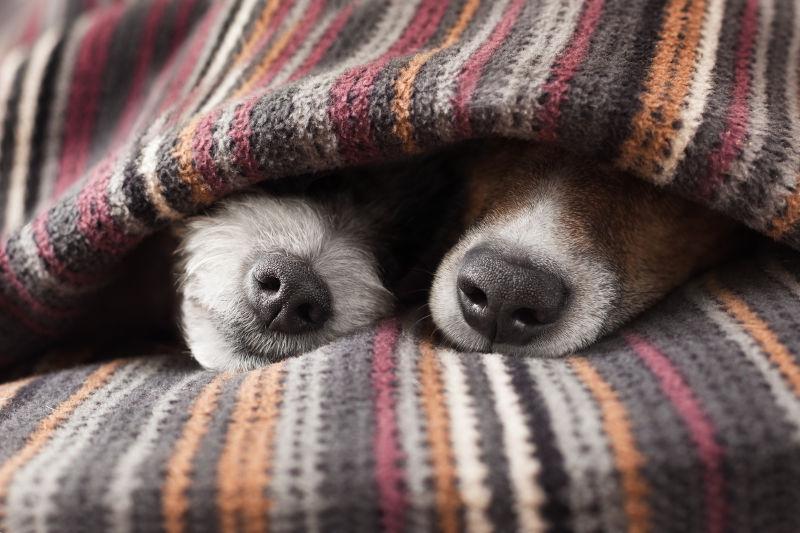 Ο σκύλος σας... προστατεύει χωρίς λόγο; Τί πρέπει να του μάθετε
