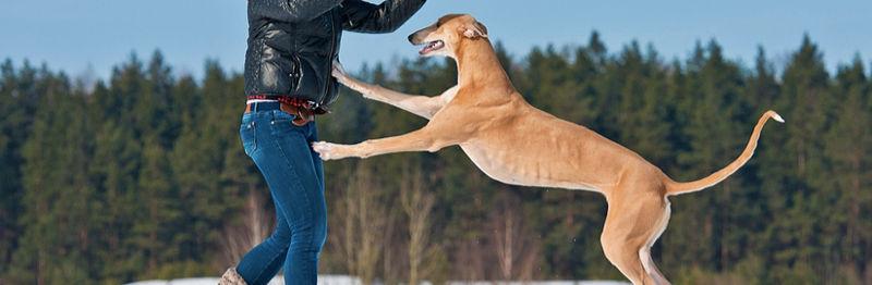Ο σκύλος μου πηδάει πάνω σε όλους! Πώς τον... προσγειώνω; sit