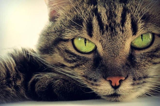 Οι Γάτες Χαρίζουν Ευτυχία! cat