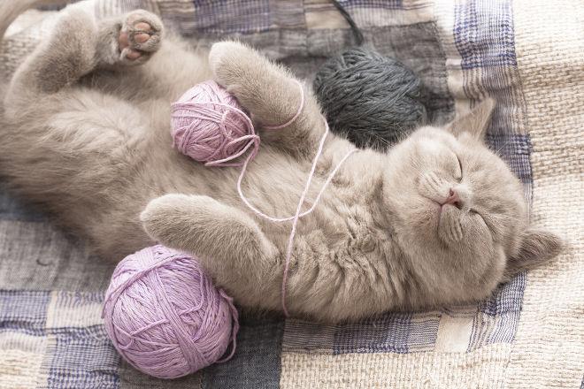 Οι Γάτες Χαρίζουν Ευτυχία! axou to