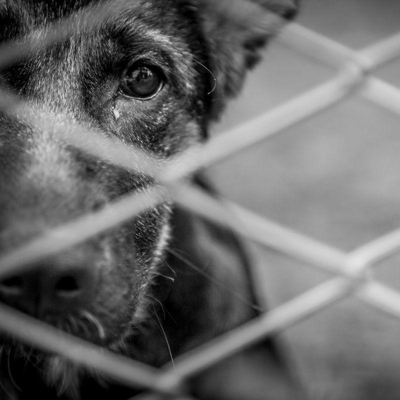 Οι Σκέψεις ενός σκύλου, για την κακοποίηση των ζώων!