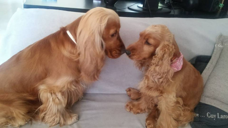 Πώς επικοινωνώ σωστά με τον σκύλο μου!