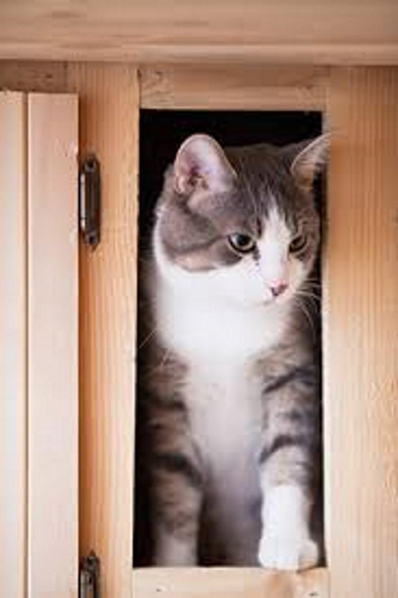 Πώς να φτιάξεις εύκολα και γρήγορα ένα σπίτι για τη γάτα σου