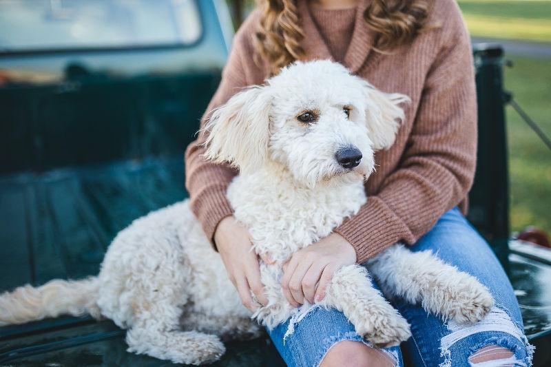 Γυναίκα με άσπρο σκύλο μαλλιαρό σε καρότσα σε αγροτικό αμάξι