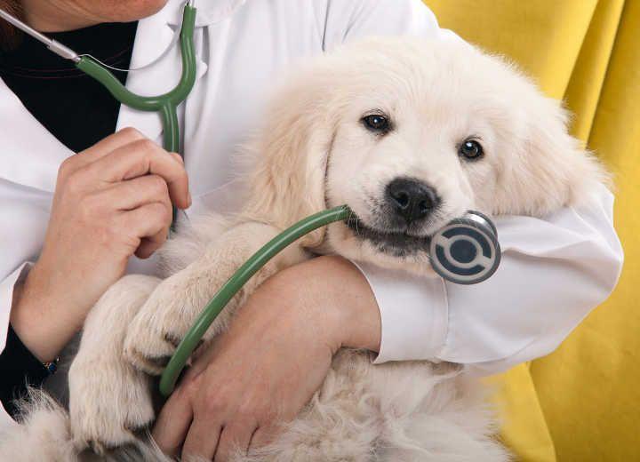 Σημάδια ότι πρέπει να πάμε τον σκύλο μας στον κτηνίατρο