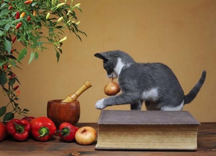 Σκόρδο και κρεμμύδι στο κατοικίδιο;