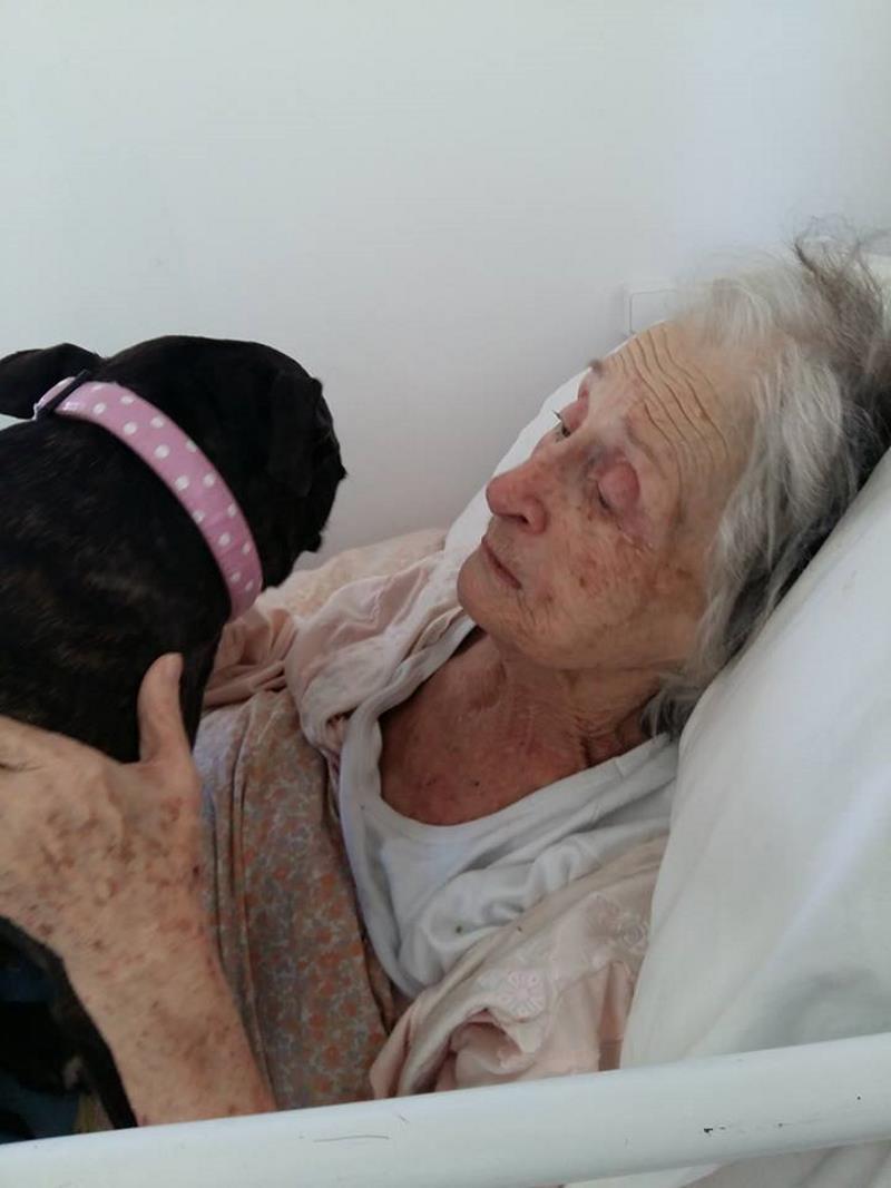 Σκυλιά θεραπεύουν ηλικιωμένους