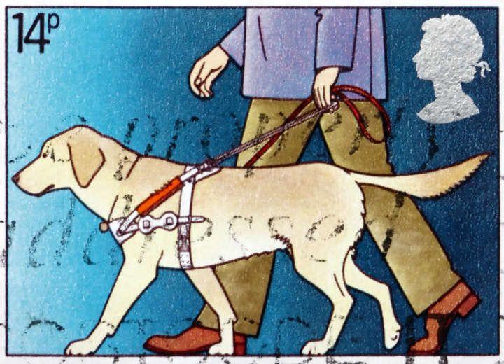 Σκύλος οδηγός τυφλών: Ο υπέρτατος φίλος των ΑμεΑ