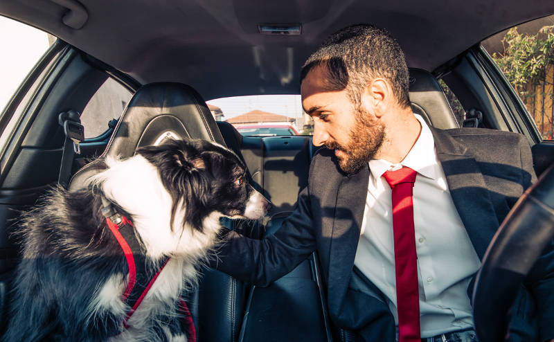 man and dog discussing in the car