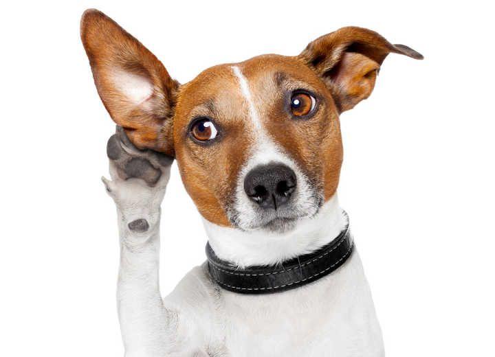 Σκυλο-κουβέντα…παράνοια ή εξυπνάδα?