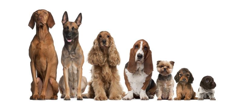 Σκύλος: Ένας... μπούσουλας για αρχάριους και μη! - axou to