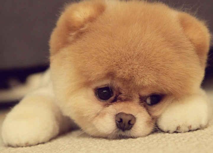 Σκύλος: Ένας... μπούσουλας για αρχάριους και μη!
