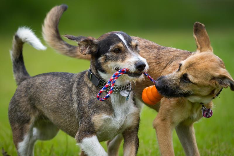 Τα μυστικά skills των… σκύλων