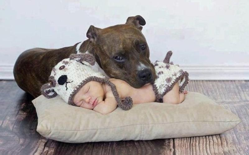 to σκυλί σου και το παιδί σου - axou to
