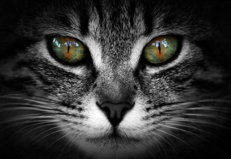 Top-16 πράγματα που δεν ξέρεις για τις γάτες