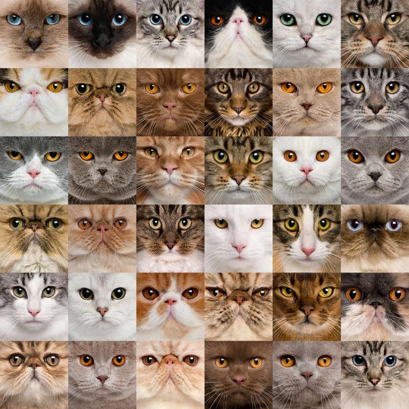 cats faces goutsou goutsou niaou