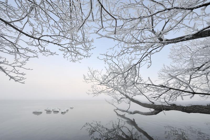 travel photographer 2020: Χιονισμένη λίμνη με κύκνους του MvOosten