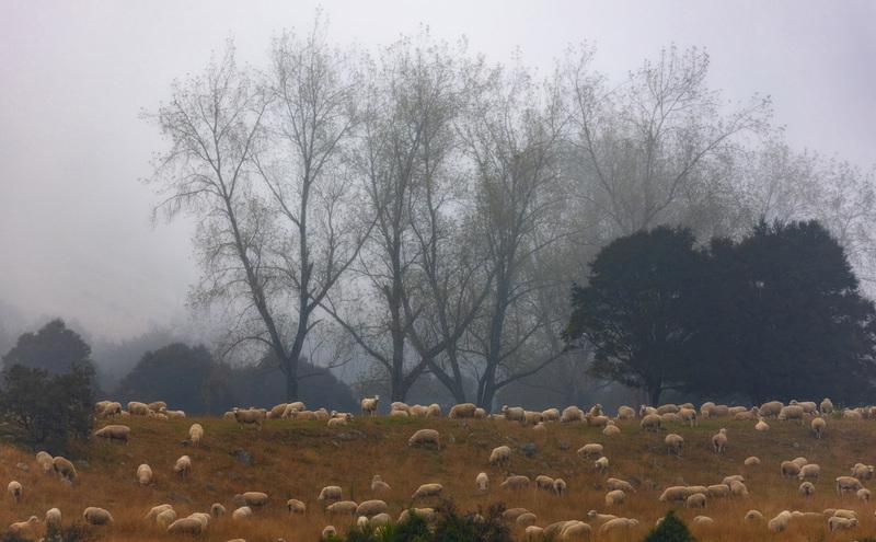 travel photographer 2020: Πρόβατα βοσκάνε στη φύση.