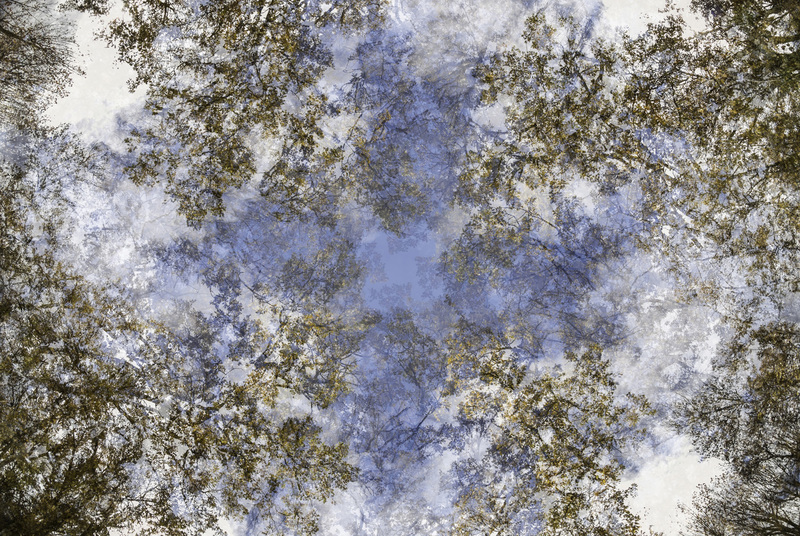 travel photographer 2020: κλαδιά δέντρων ουρανός - M Sancez