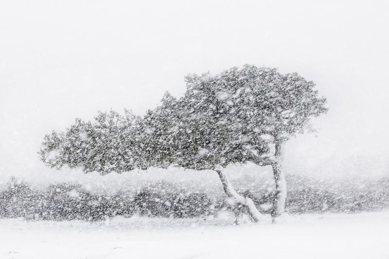 travel photographer 2020: Δέντρο σε χιονοθύελλα του Carboni