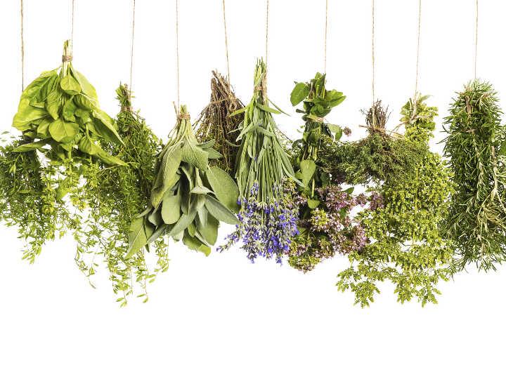 Βότανα: Το αρχαιότερο ελληνικό φαρμακείο της φύσης