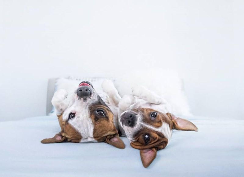 Ζηλεύουν τα σκυλιά; Η λύση είναι στο χέρι μας!