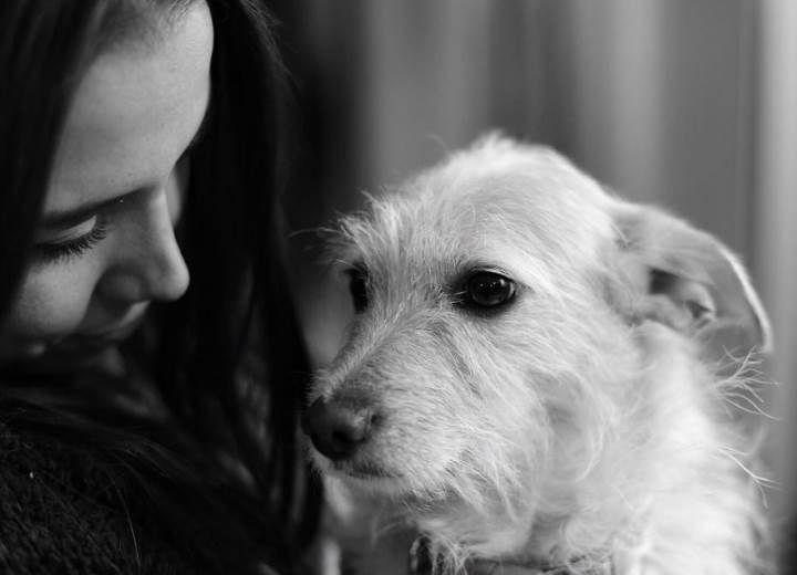 Ζηλεύουν οι σκύλοι; Η λύση είναι στο χέρι μας!